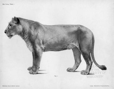 Der Löwe, Tafel 1