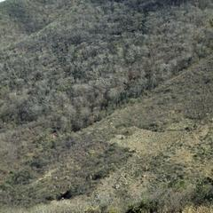 Hills with very dry tropical forest, between Chiquimula and Zacapa