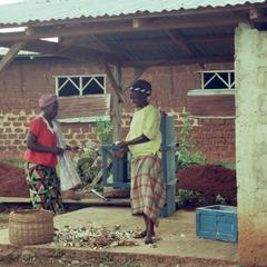 Preparing cassava
