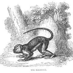The Malbrouk