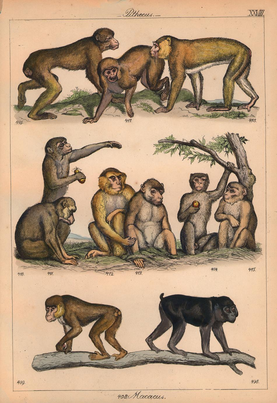 Macaque Group Print