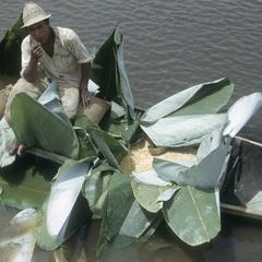 Unloading Guatuso maize at Los Chiles