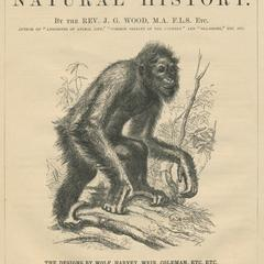 Routledge's Illustrated Natural History