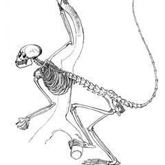 Squirrel Monkey Skeleton Print