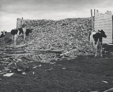 Aftermath of the 1958 Colfax tornado