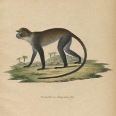 Sykes Monkey Print