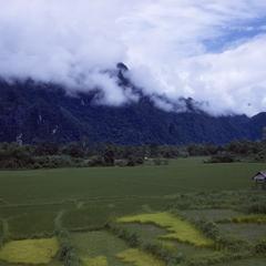 Rice paddies