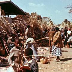 Market Place for Sugar Cane