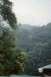 View into cloud forest from Hotel Belmar, Monteverde