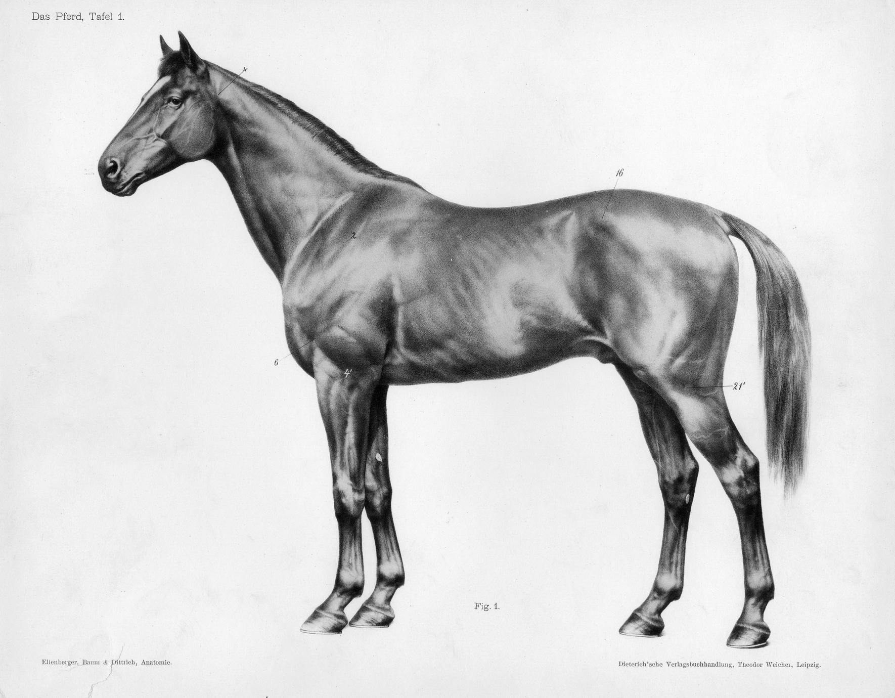 Das Pferd, Tafel 1