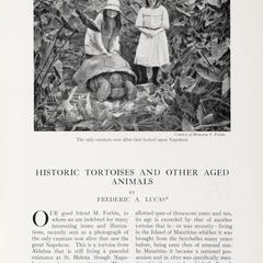 Historic tortoises and other aged animals